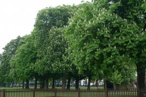 Wanstead - Christchurch Green