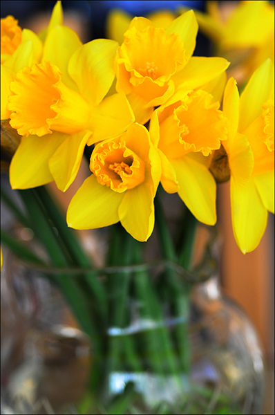 """© Geoff Wilkinson, who writes on Wanstead Daily Photo: """"Very simple, just a lovely bunch of daffs..."""""""
